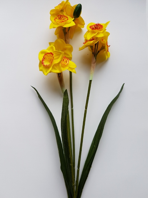 Narcis trs     61 cm